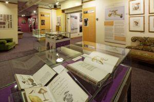 Armitt Gallery