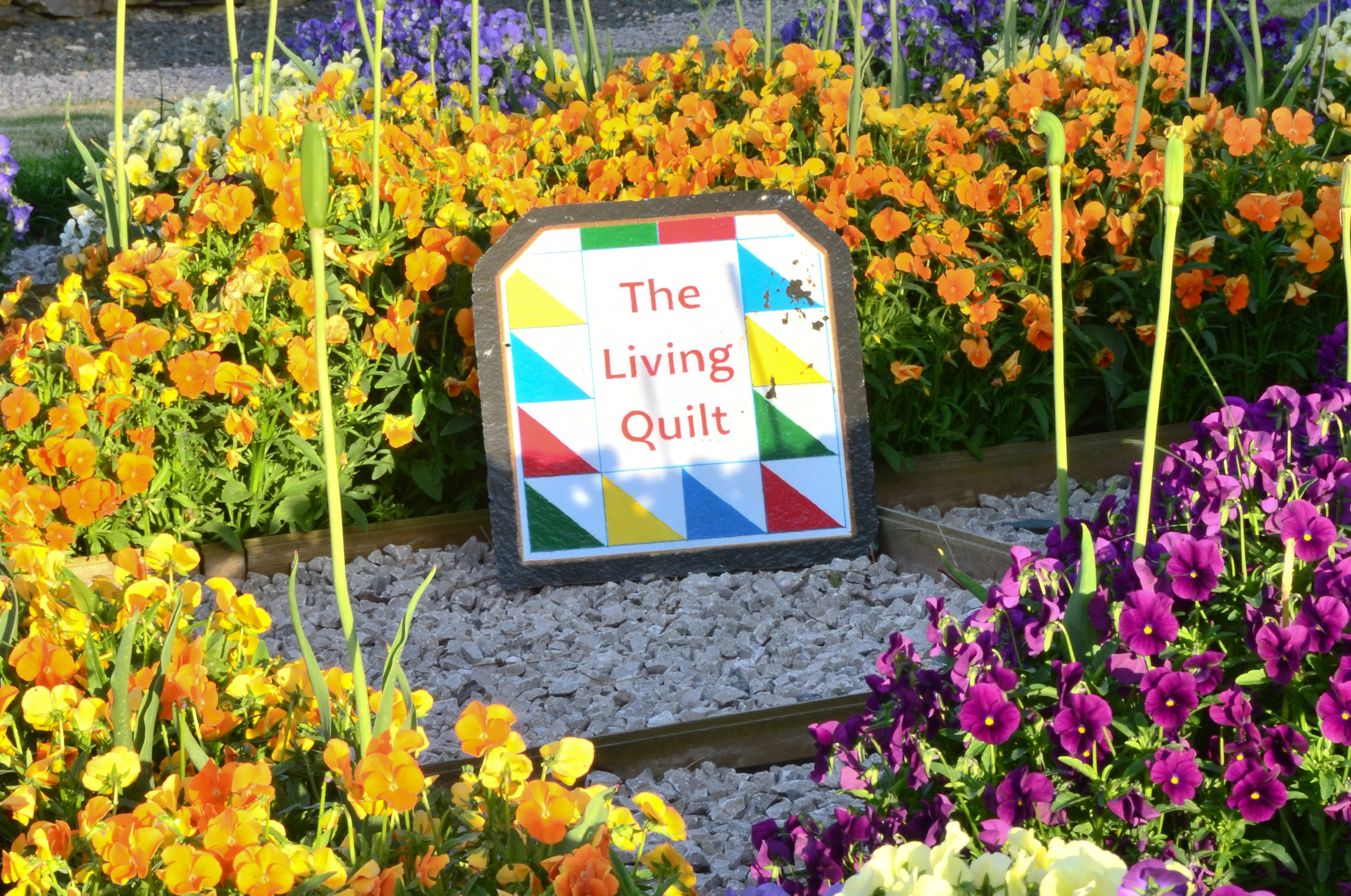 Quaker and Quilts