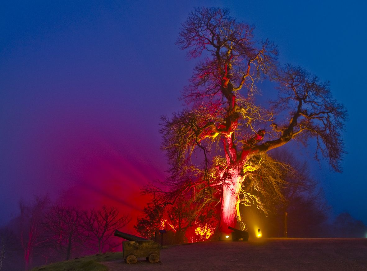Have a Tree-mendous Cultural Adventure this Autumn